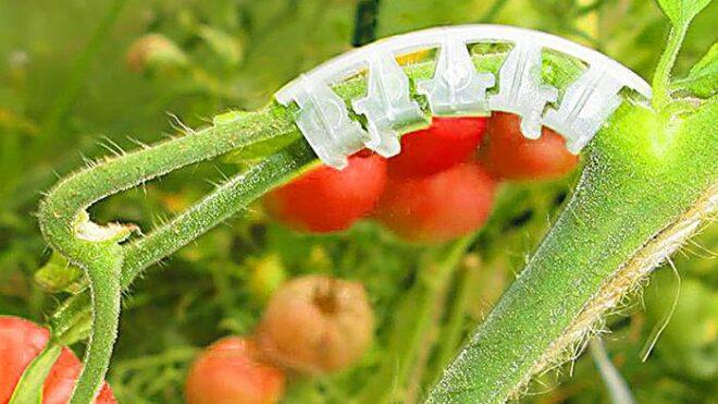 Кистедержатель для томатов